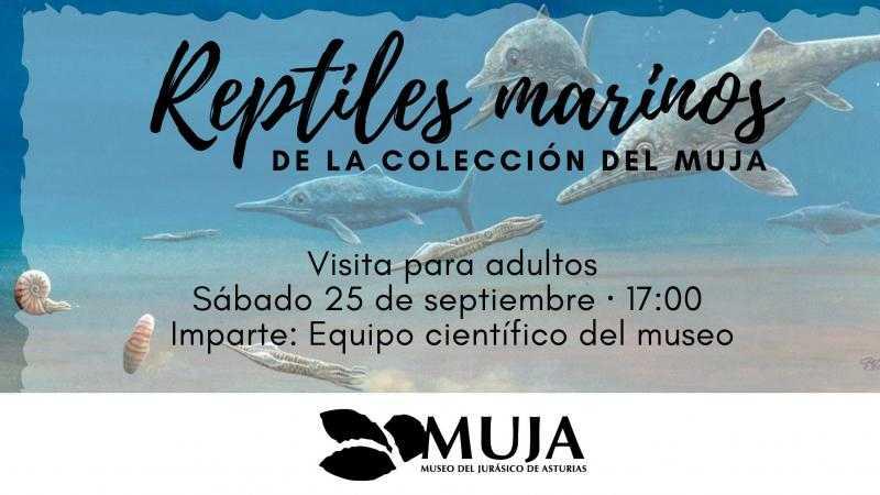 Reptiles marinos de la colección del MUJA