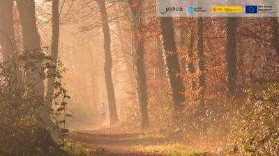 O Bosque dos Nosos Ancestros en Ourense