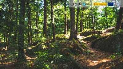 Rutas e Lendas dos Druidas Celtas en Lugo