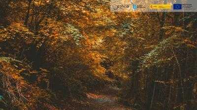 Rutas e Lendas dos Druidas Celtas - Provincia de Pontevedra
